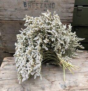 Statice - Limonium Tataricum - doos 4 kilo