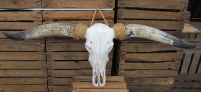 Longhorn 284