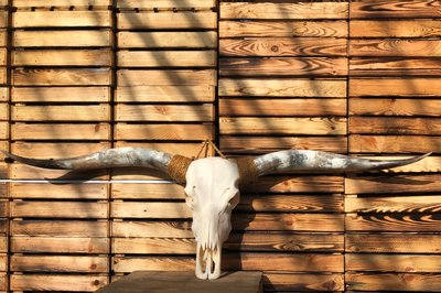Longhorn 39